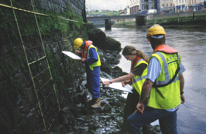 Intertidal Survey in Drogheda, Ireland,